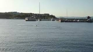 Делфини в залива на Несебър