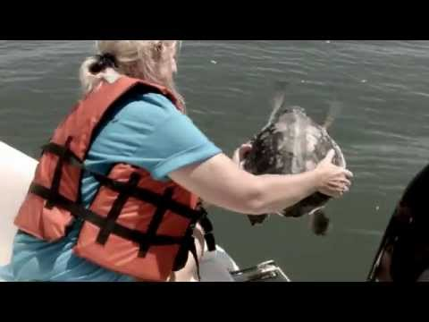 Five Critically Endangered Sea Turtles Released into Gulf of Mexico