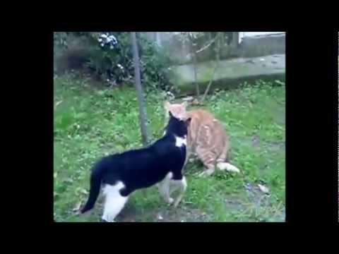 Kakva borba macki