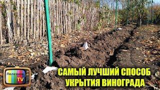 видео Укрытие винограда на зиму