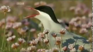 Hebrides - Islands on the Edge Episode 1