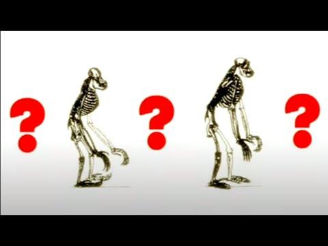 Загадочные предки человечества