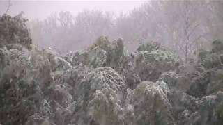 速報! 春分の日に南岸低気圧が雪を降らせている、八王子市内 thumbnail
