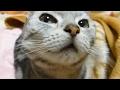 母ちゃんにカチンときた猫、プチ家出する ~オバちゃんの世話になる -Annoyed Cat runs away from Mom