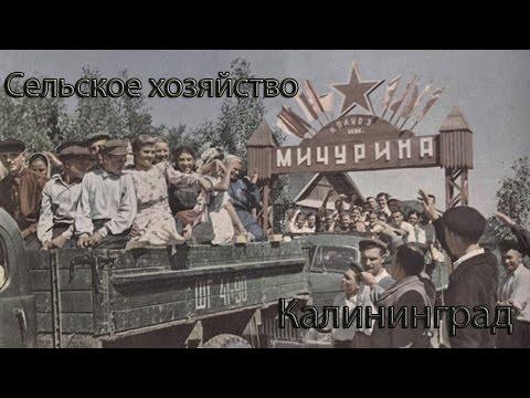Сельское хозяйство в Калининградской области после войны