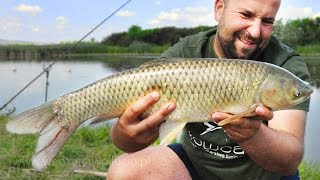 Grass carp, tench and crucian carp on feeder - fishing in Old San Hurko Poland