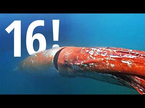 Гигантский кальмар «заглянул» в гости в японский порт (новости)