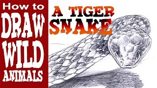 How to Draw an Angry Tiger Snake (Advanced- Spoken Tutorial)