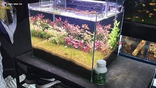 Quá trình Setup hồ thủy sinh 40cm vừa dễ vừa đẹp