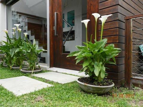 Como hacer un jardin hermoso en casa youtube for Jardines pequenos para frentes de casas