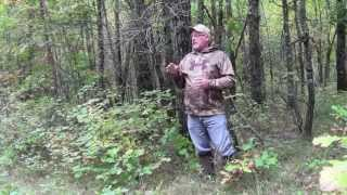 Attract a big buck with a Mock Scrape