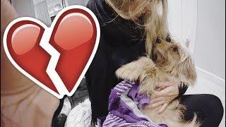 vlogg: RASMUS MÅSTE OPERERAS (när ska veterinärbesöken ta slut egentligen?!)