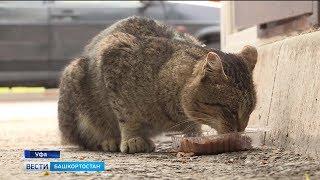 В Уфе может появиться муниципальный приют для бездомных животных