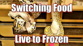 Switching From Live t๐ Frozen Prey. Insider Tips and Tricks
