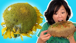 How to Eat a SUNFLOWER HEAD
