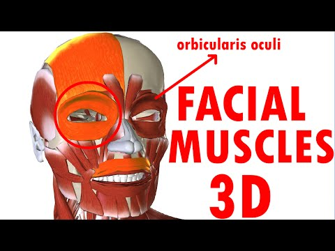 Muscles Of Facial Expression - Face Anatomy part 1