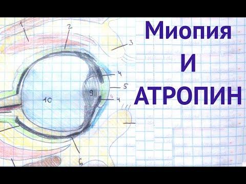Миопия и атропин. Ответы на вопросы. Глеб Арсланов. Практика и данные исследований.