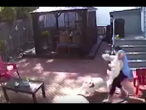 Loose Dogs Attack Great Kills Woman, Pets In Her Own Backyard -- Then Barge Into Her Home