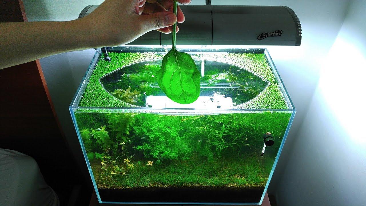 7-months-update-feeding-frenzy-no-filter-no-co2-no-ferts-5-gallon-nano-tank