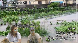 [어느날 갑자기 밭이 생겼다] Ep.9 폭우에 꽃밭이 물에 잠겼어요 ㅠㅠ