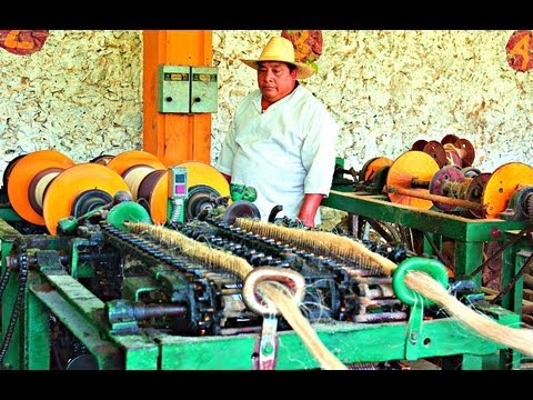 Sisal Fiber Processing - Sotuta De Peon, Yucatan