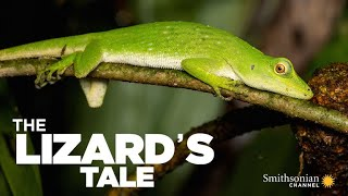 The Lizard's Tale 101: Meet the Anoles