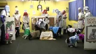 A Click & A Treat - The Friendly Dog Club Nativity Play 2011