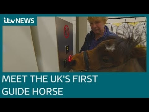 6bf057411 Meet Digby, the UK's first guide horse | ITV News | WatsupEurope ...