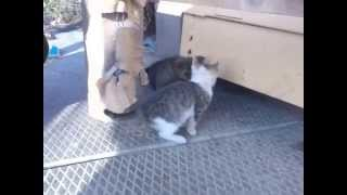 Игра котенка и щенка