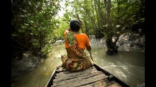 Beautiful Places To See- The World Biggest Mangrove Forest Sundarban, Bangladesh