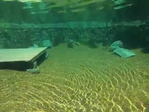 Arquitetura e cia dicas sobre piscinas de areia artific for Piscinas biologicas
