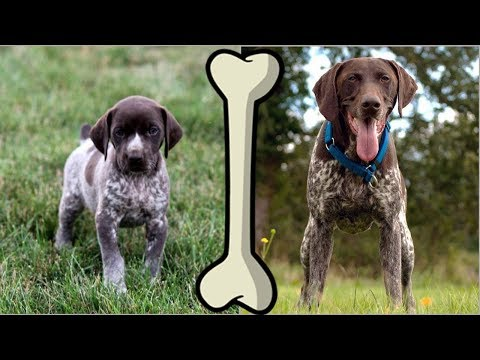 Smartest Dog. Before and After [HD] ★2018