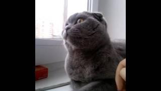 Странное поведение кошки