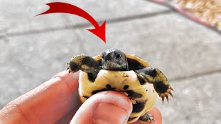 NEW CUTE BABY TORTOISES!!  + *FISH POND TOUR*