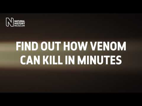Face your fears at the #Venom: Killer and cure exhibition  | Natural History Museum