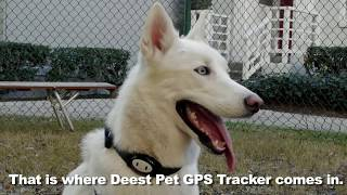 Deest GPS Pet Collar Tracker Real Time Locator