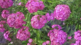 Разноцветное лето