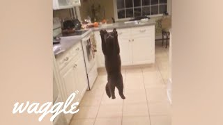 Flying Cats   Funny Pet Compilation