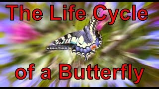 The Life Cycle of a Butterfly Song | Silly School Songs