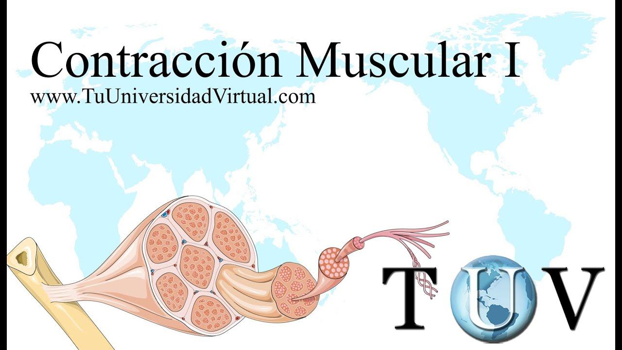 Parte 1) Contraccion Muscular Fisiologia Como Funciona Actina y ...