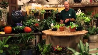 How to Grow Arugula Indoors