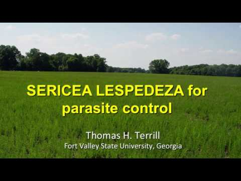 SERICEA LESPEDEZA for parasite control-Tom Terrill