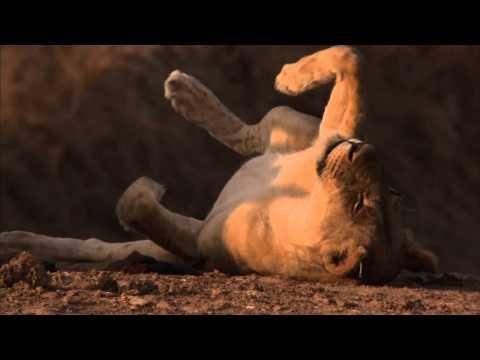 Robin Pope Safaris | Carnivore Week | Safari Zambia | South Luangwa