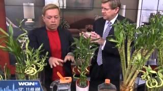 LUCKY BAMBOO CARE - TU BLOOM WGN News Garden Segment