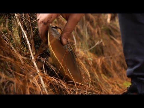 Сколько стоят грибы в Эквадоре?
