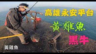 2019/12/16 高雄永安平台 磯釣 黃雞 黑牛 螺釣