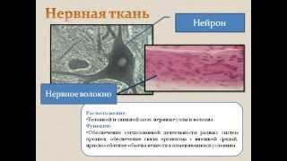 Ткани человека.AVI