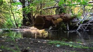 Saving Salmon One Log at a Time