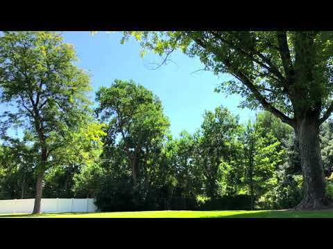 sunny-day-at-the-park-–-soundscape-by-modern-music-studio