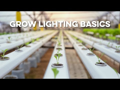 Grow Lighting Basics - All Grow Lighting Compared Education | Best Grow Light Grow Indoor Greenhouse